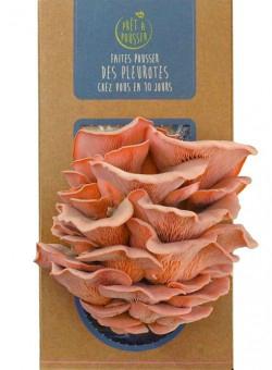 Kit-rose-pleurotes