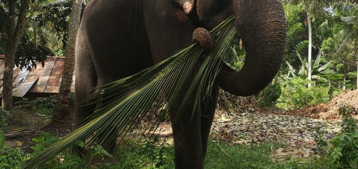 repas elehant