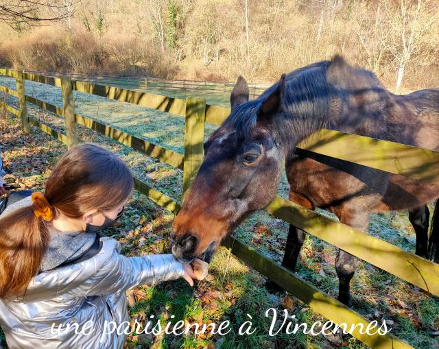 cheval cabanes de la chaussee